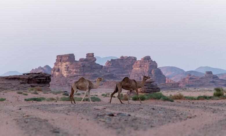 صورة من الوجهات السياحية في السعودية